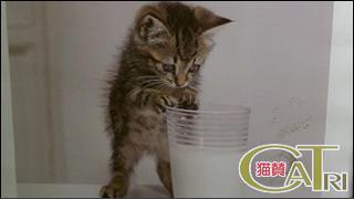 CoTri 番外編 「CaTri -猫賛-」 cat.113-118【まとめ版】