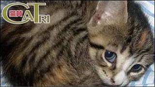 CoTri 番外編 「CaTri -猫賛-」 cat.120「丸まる、まんまる!」