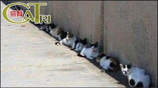 CaTri -猫賛- 「どこも猫だらけです♪♪」