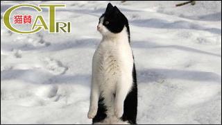 CaTri -猫賛- 「きゃっと・すたんでぃんぐ?」