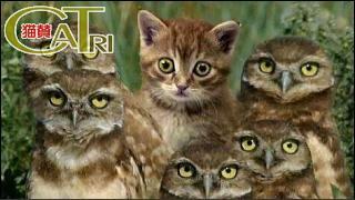 CaTri -猫賛- 「ボク、なんか違う?」