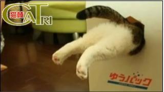 CaTri -猫賛- 「業務用の気がするww」