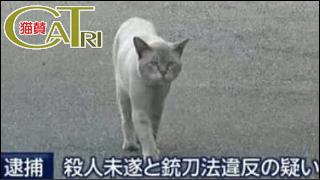 CaTri -猫賛- 「猫のセカイのアニキ?」