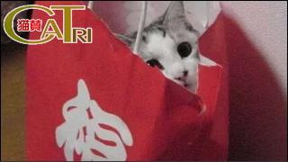 CaTri -猫賛- 「福を呼んでくれてるのかもしんないw」