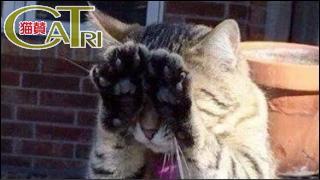 CaTri -猫賛- 「なぜか「にゃんだばだー」ってフレーズが浮かんだw」