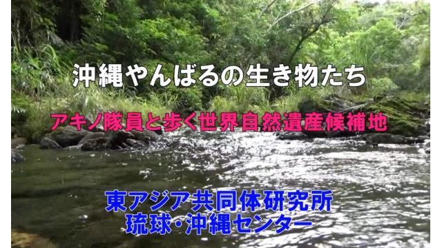 第251回UIチャンネル 沖縄やんばるの生き物たち アキノ隊員と歩く世界自然遺産候補地