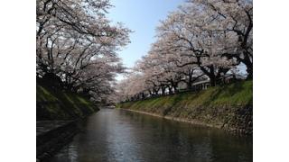 解説テキスト《記念コラム》桜が咲いたから、不安と緊張を減らしてしまおう!