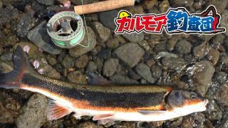 【レポート】カルモア釣査団 河川遡上のマルタ釣り!その名もマルティング