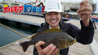 【レポート】カルモア釣査団 海上釣堀で高級魚のハタを釣る![Jsフィッシング]