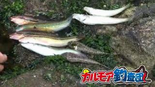 【カルモア釣査団】東京湾の無人島 猿島で磯釣り!