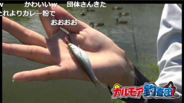 淡水小物釣り実況 爆釣間違いなし!? クチボソやモロコが釣れた