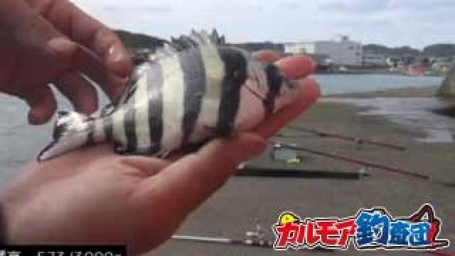 秋の大収穫祭!堤防で漁獲高3kgを目指す