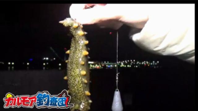 【検証】鶏肉で魚は釣れるのか?鳥皮と身を餌にした魚釣り