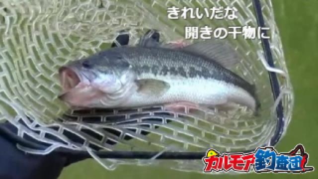 真冬の釣パラダイスでバス釣り[バスポンドのまとめ]