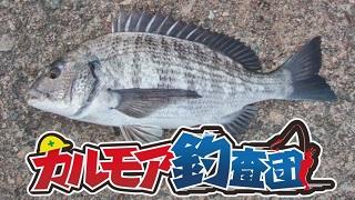 【レポート】カルモア釣査団 黒鯛を伝統釣法のヘチ釣りで狙う!