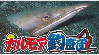 【レポート】カルモア釣査団 ダイナンウミヘビ釣り実況