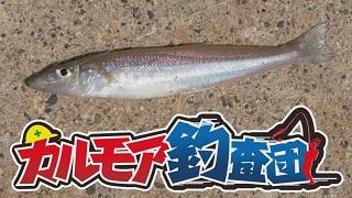 【レポート】カルモア釣査団 キスから始めるわらしべ長者釣り