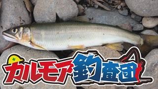 【レポート】鮎ってマジでルアーで釣れる?釣査