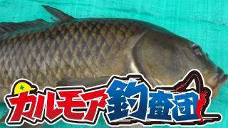 【レポート】カルモア釣査団 パンで鯉を釣る!