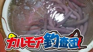 【レポート】カルモア釣査団 ユムシを使ったぶっ込み釣り