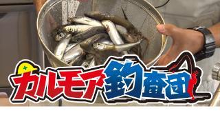 【レポート】収穫の秋 堤防の魚釣り実況