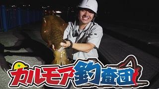 【レポート】カルモア釣査団 アオリイカ釣り(エギング)