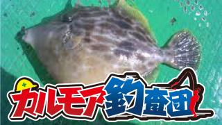 【レポート】カルモア釣査団 堤防からカワハギ狙いで隊長の連敗阻止!