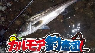 【レポート】カルモア釣査団 索敵、激流シーバスを狙え