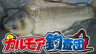 【レポート】カルモア釣査団 管理釣り場でヘラブナ釣り IN 釣りパラダイス