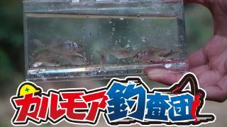 【レポート】小さなビッグゲーム タナゴ釣り実況