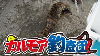 【レポート】カルモア釣査団 海のギャング ウツボを狙う!