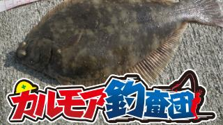 【レポート】冬の風物詩 東京湾のカレイ釣り!