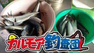 【レポート】カルモア釣査団 本牧海釣り施設で五目釣り