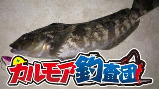 【レポート】 カルモア釣査団 東京湾アイナメフィッシング