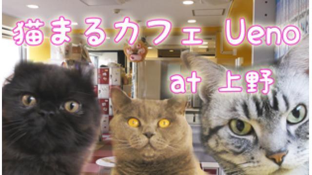 『猫まるカフェ Ueno』店舗情報