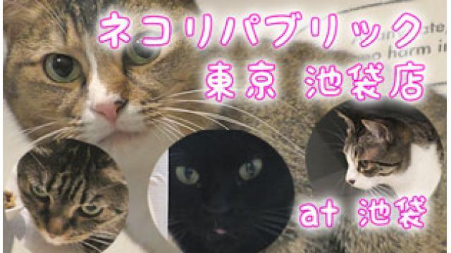 『ネコリパブリック 東京 池袋店』店舗情報