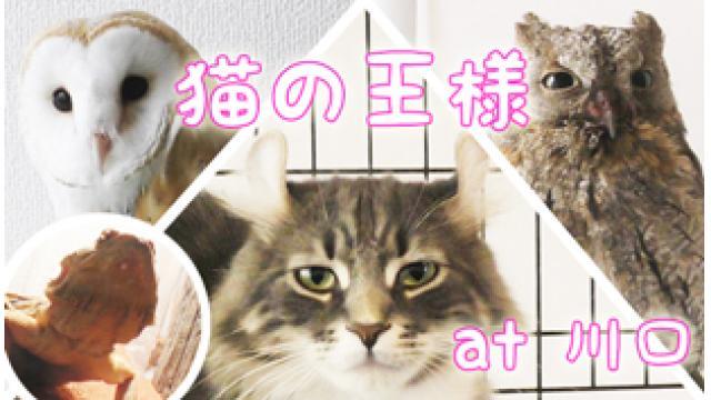 『猫の王様』店舗情報