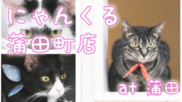 『譲渡型猫カフェにゃんくる 蒲田町店』店舗情報