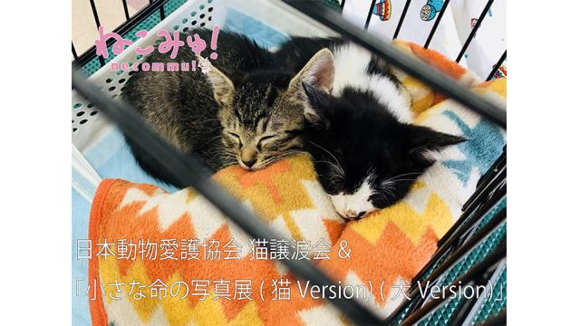 日本動物愛護協会 猫譲渡会&『小さな命の写真展(猫Version) (犬Version)』生中継