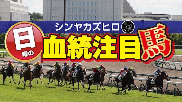 【2020/8/29】シンヤカズヒロ 日曜の血統注目馬