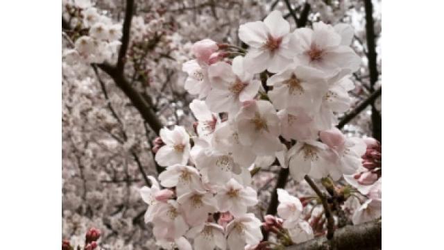 平成最後の花見