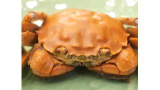 【ポエム】上海蟹慕情