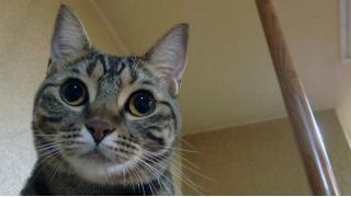 ねこ居酒屋の酒瓶ダンボールに、猫が潜んでいた!