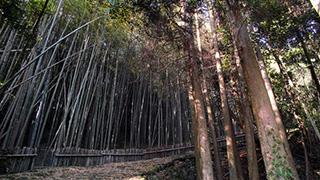 GWに寄りたい、加治木JCT付近の絶景スポット2つ