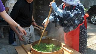 寒さにつよーいお茶の産地、松ケ岡で楽しめるお茶づくり体験。
