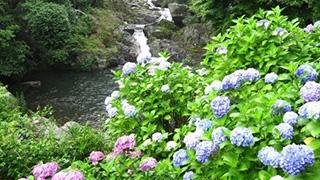 梅雨の季節を楽しめ!滝と紫陽花のコラボが美しすぎる。