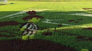 田んぼが俺のキャンパスだぜ。貴重な田んぼアートってもんを見せてやる。