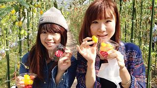 これぞ太陽の恵み!女子の味方「プチトマト」を食べ放題のトマト狩り。