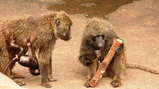 お猿さんも大喜び!餌やり体験がなかなか凝ってる。