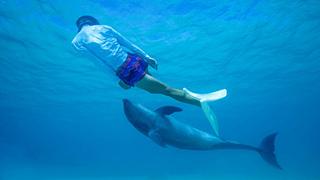 日本初!外洋でイルカと触れ合う体験ができちゃうんだってさ。